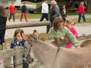 campers petting donkey