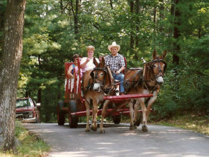 wagon rides with two donkeys